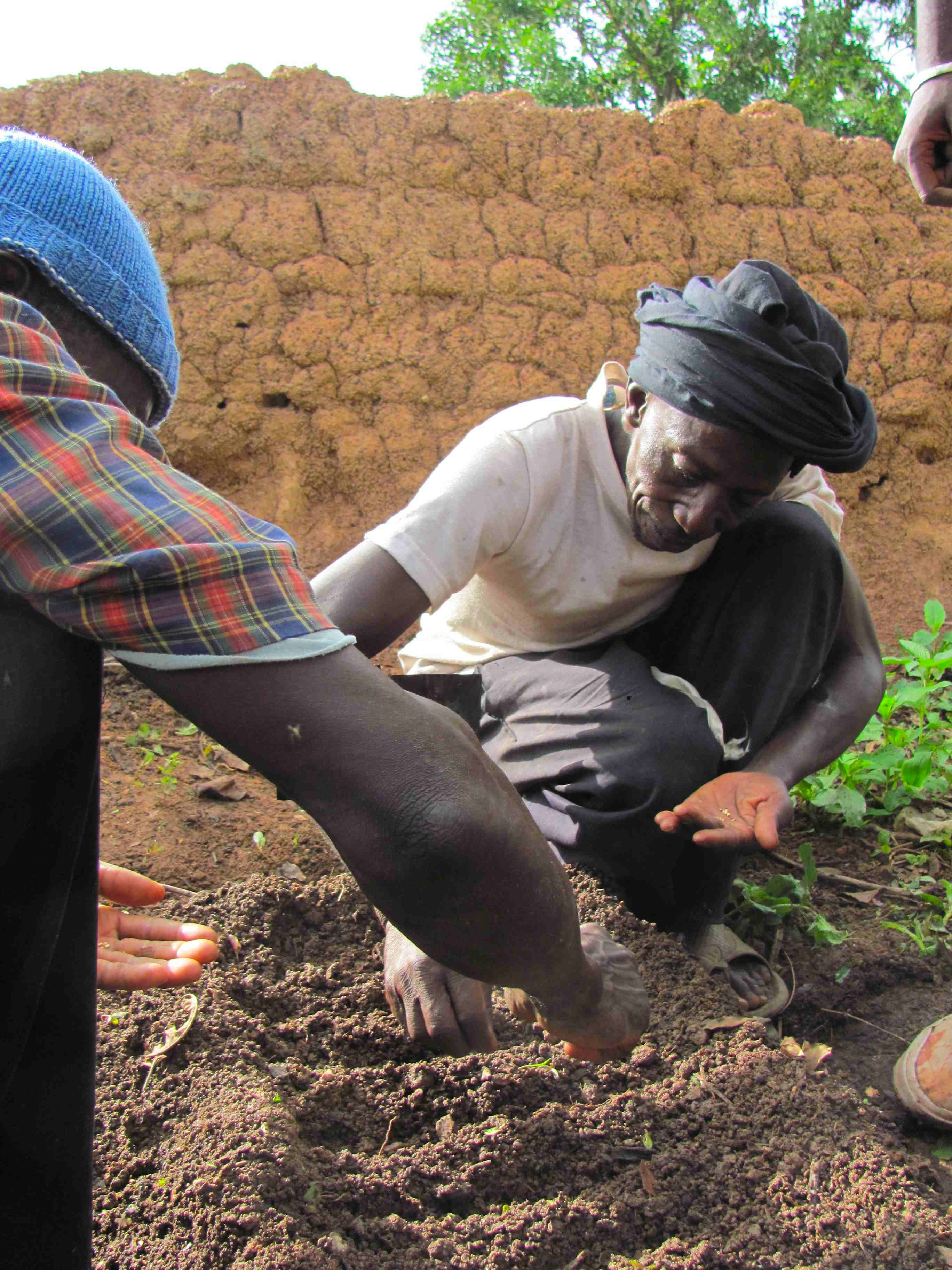 Farmers Practice Ing The Seeds In Nursery Typically Might Throw Randomly Or Clumps By Them Out It Will Be Easy To